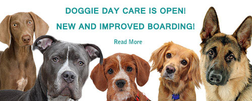 Wantagh Animal Hospital Doggie Day Care Coming Soon