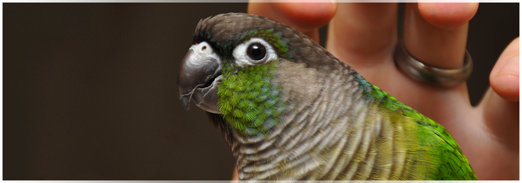 Avian and Exotic pet care at Wantagh Animal Hospital