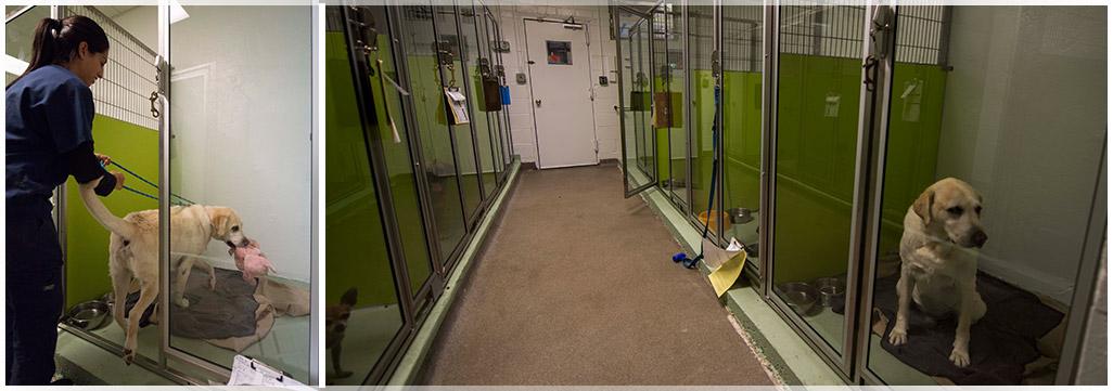 Welcome to Wantagh Animal Hospital