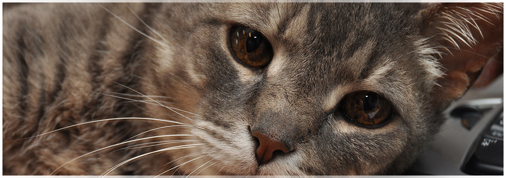 Feline Wellness care at Wantagh Animal Hospital