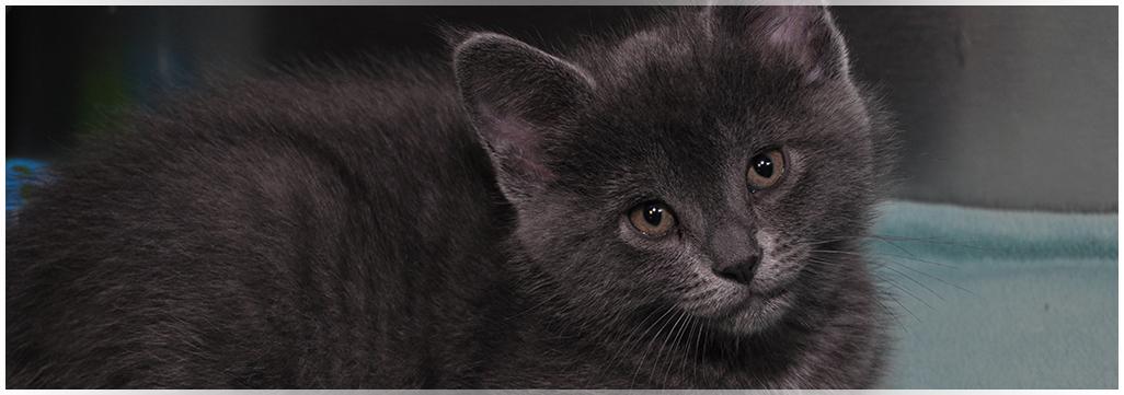 Kitten care at Wantagh Animal Hospital