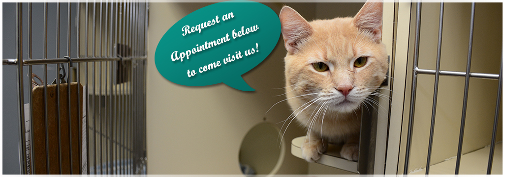 Request an appointment at Wantagh Animal Hospital